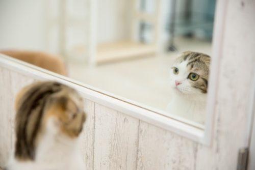 鏡をのぞく猫