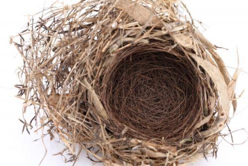 巣 イメージ