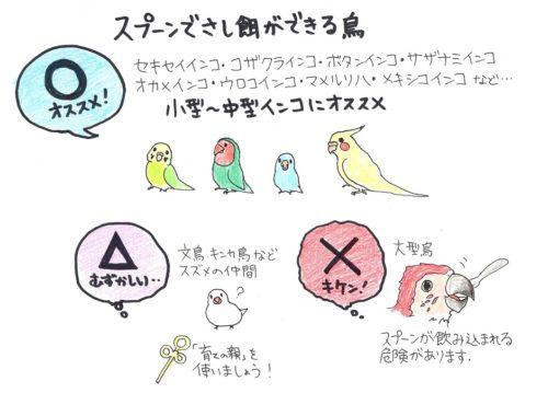 スプーンでさし餌できる鳥