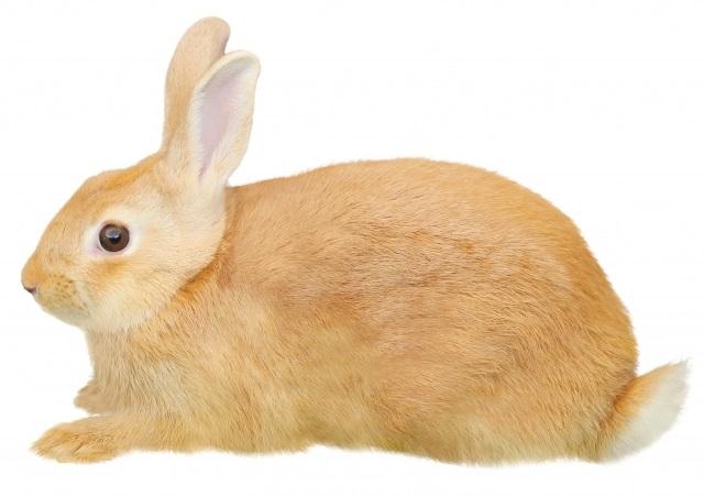 ウサギ イラスト