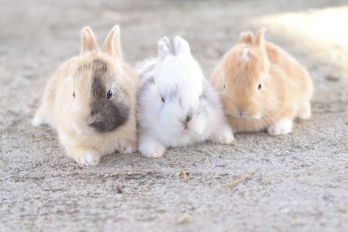 いろんな色のウサギ