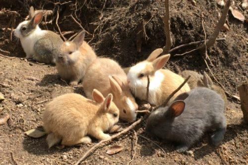 ウサギ 外飼い