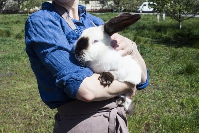 大きなウサギ
