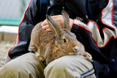 抱っこウサギ