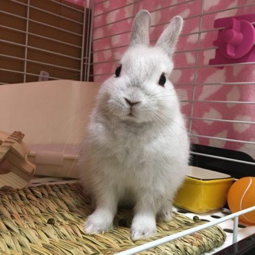 こちらを見るウサギ