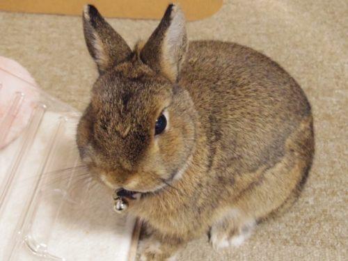 小さなウサギ