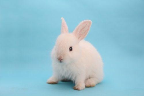 座り込むウサギ