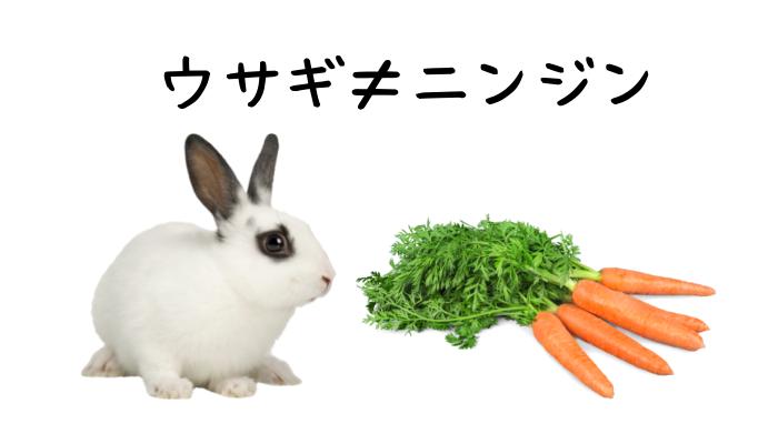 ウサギの餌 ニンジン