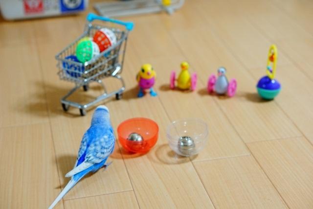 おもちゃを選ぶインコ