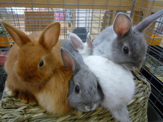 ミニウサギ盛り