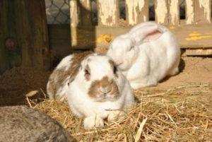 リラックスしているウサギ