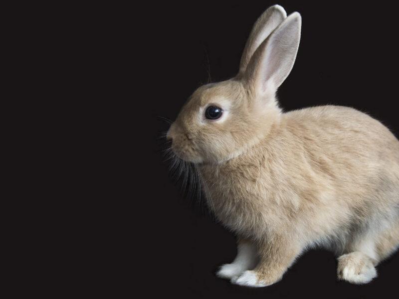 怖がるウサギ