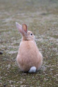 そっぽを向くウサギ