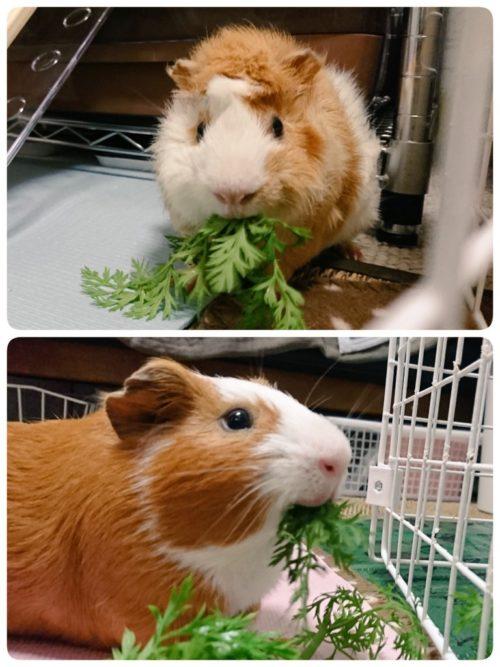 葉を食べるルナ&エトちゃん