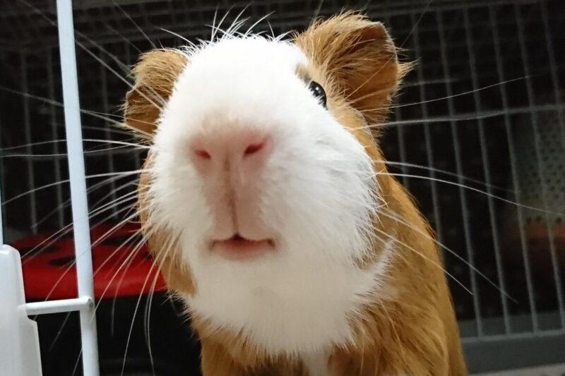 鼻と口が可愛いルナ君