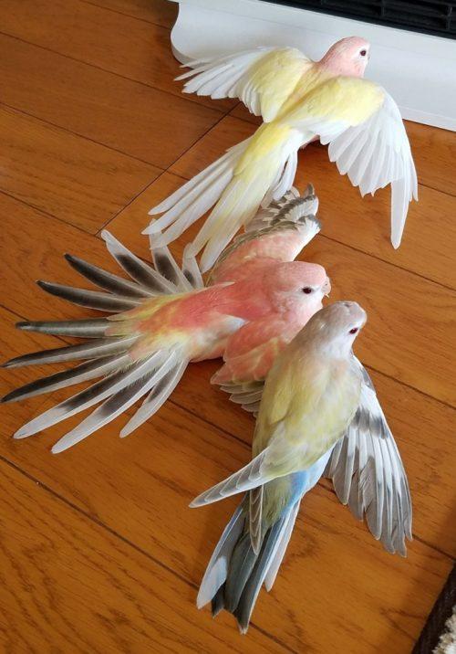美しい3羽