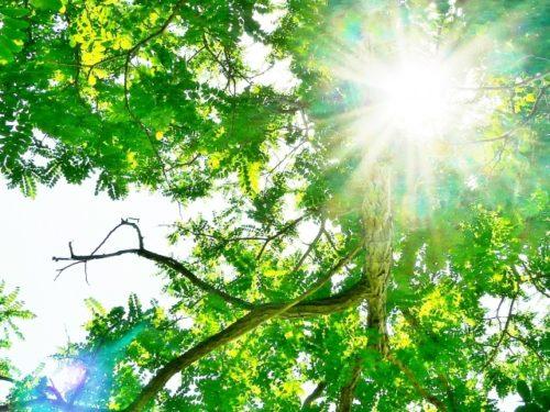日光浴 イメージ