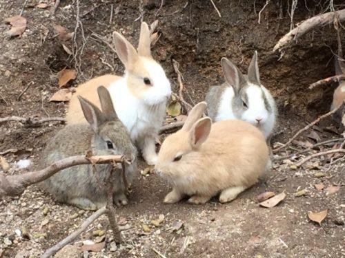 ミニウサギたち