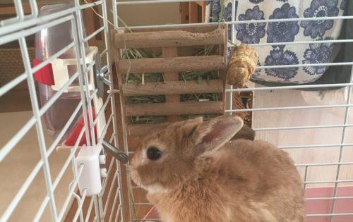 ウサギ ケージの中