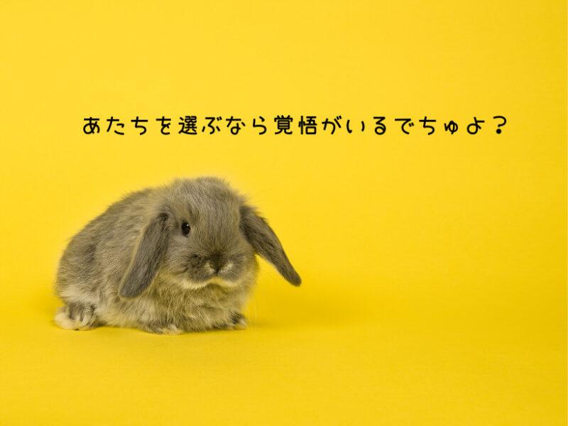 子ウサギを選ぶには覚悟がいる