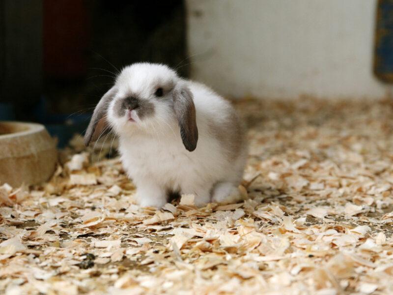 ひとりのウサギ